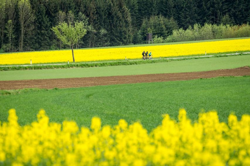 ANYROAD-REGION KAMPTALIm Naturpark Kamptal-Schönberg (Waldviertel) führt so gut wie jede Straße ins ganz persönliche Radsport-Glück. Und immer säumen Naturgenuss, edle Tropfen und erdige Gastfreundschaft den Weg ...